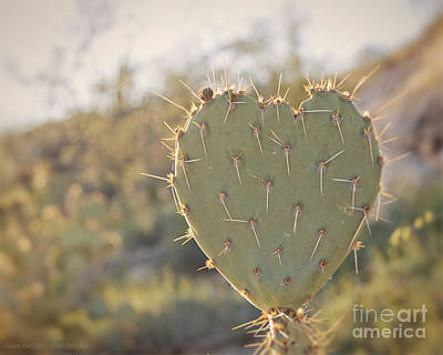 Photograph - Kinda Heart Cactus by Diane Enright