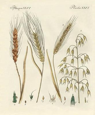 Oder Drawing - Kinds Of Grain by Splendid Art Prints