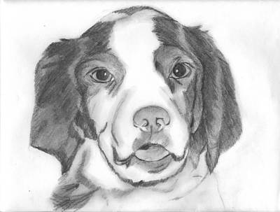 Brittany Spaniel Drawing - King by Eric Slover