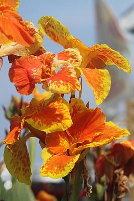 King Humbert Canna Lilies  Art Print by Cathy Lindsey