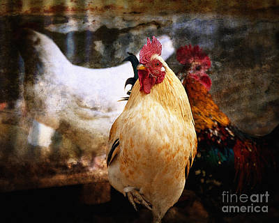 Photograph - King In The Chicken Coop by Lee Craig