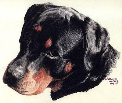 Rottweiler Puppy Drawing - King by Lorraine Zaloom