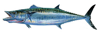 King Mackerel Art Print