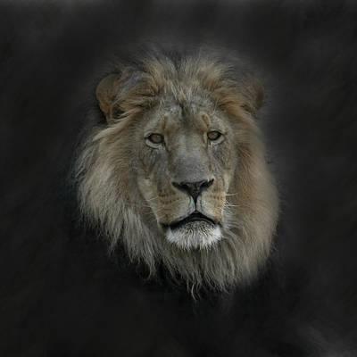Wild Cats Digital Art - King Of Beasts Portrait by Ernie Echols