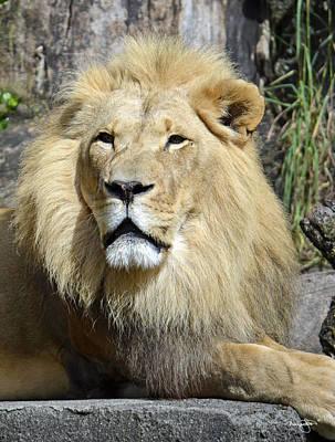 Photograph - King Of Beasts by Shanna Hyatt