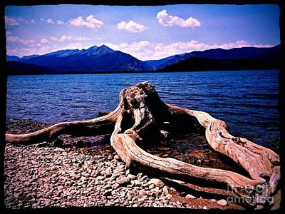 King Of The Driftwood Art Print by Garren Zanker