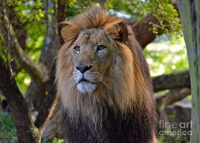 Photograph - King Of The Jungle by Carol  Bradley
