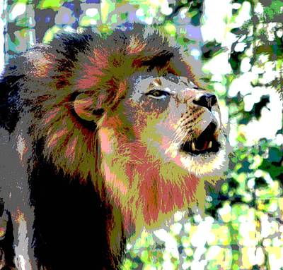 Photograph - King Of The Jungle by Deena Stoddard