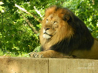 Art Print featuring the photograph King Of The Jungle by Emmy Marie Vickers