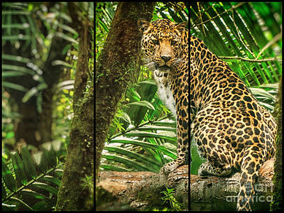 Photograph - King Of The Jungle by Mary Lou Chmura