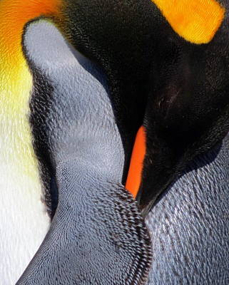 Photograph - King Penguin by Ramona Johnston