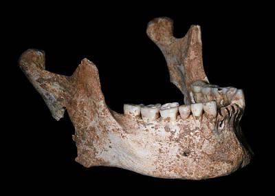Philip Photograph - King Philip II Of Macedon's Jaw Bone by Javier Trueba/msf