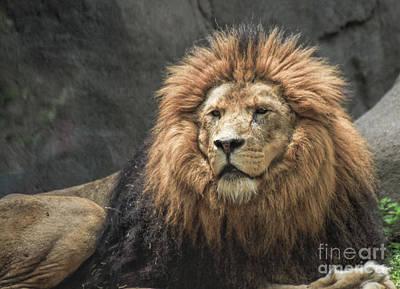 Photograph - King by Richard Lynch
