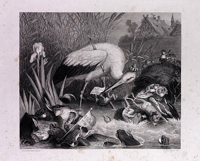 Red Foxes Drawing - King Stork And The Frogs by English School