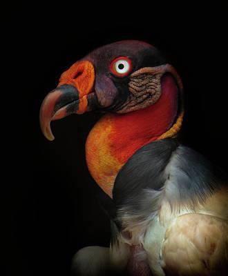 King Vulture-sarcoramphus Papa Art Print