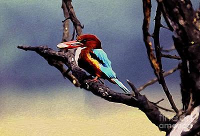 Photograph - Kingfisher  by Manjot Singh Sachdeva