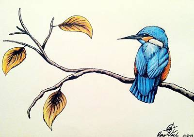 Kingfisher Mixed Media - Kingfisher by Rory Viale