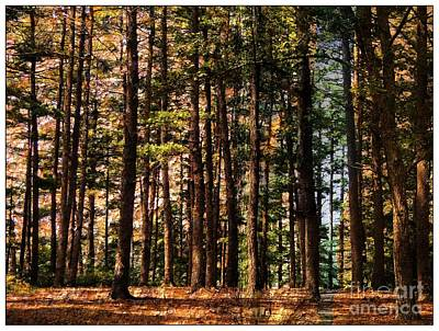 Photograph - Kingston Forest by Marcia Lee Jones