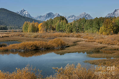 Kiss Of Fall In The Grand Tetons Print by Sandra Bronstein