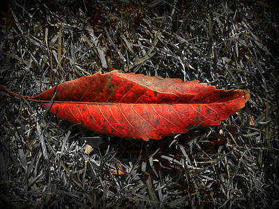 Photograph - Kiss Of Leaf by Wayne Sherriff