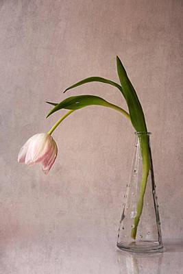 Kiss Of Spring Art Print by Claudia Moeckel