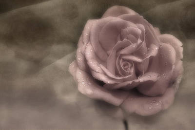 Photograph - Kissed By The Rain by Susan Candelario
