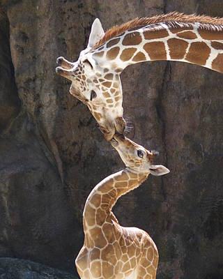 Kissing Giraffes Art Print by Jf Halbrooks