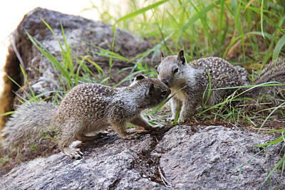 Photograph - Kissing Little Squirrels by Masha Batkova