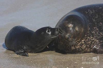 Kissing Seals Art Print