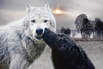Animals Photos - Kissing Wolves by Joachim G Pinkawa
