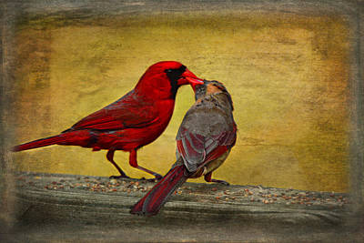 Photograph - Kissy Kissy Birds by Linda Segerson