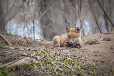 Tommytrout Photograph - Kit Fox 2011-2   by Thomas Young