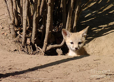 Photograph - Kit Fox Pup by Meghan at FireBonnet Art