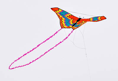 Kite With Pink Tail Art Print by Michael Bruce