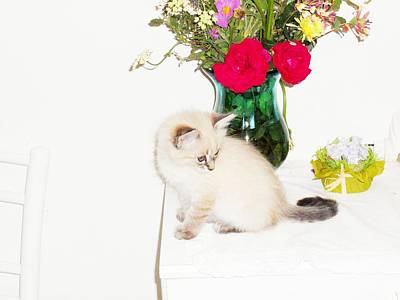 Donatella Photograph - Kitten And Flowers by Donatella Muggianu