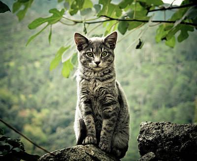 Kitten Art Print by By Corsu Sur Flickr
