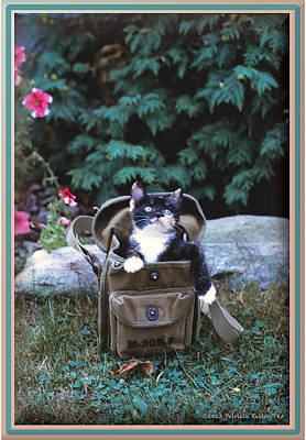 Kitten In A Canvas Bag Art Print by Patricia Keller