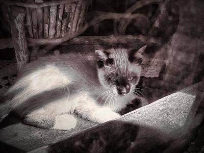 Kittie Photograph - Kitten In A Portuguese Cottage  by Menega Sabidussi