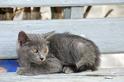 Benches Photograph - Kitten In Hydra Island by George Atsametakis