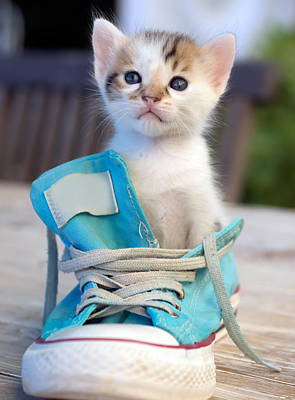 Kitten In Sport Shoe Art Print by Elly De vries
