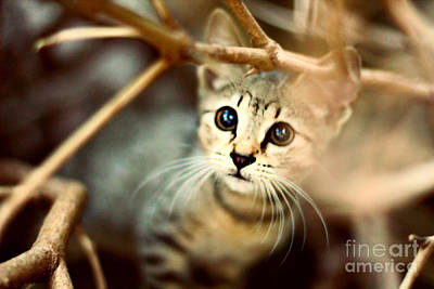 Adorable Photograph - Kitten by Jasna Buncic