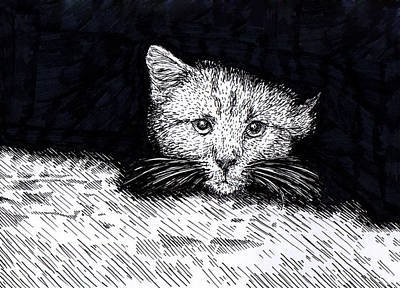 Drawing - Kitten by Karl Addison