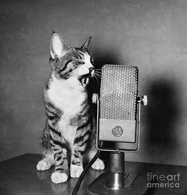 Photograph - Kitten On The Radio by Syd Greenberg