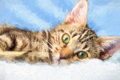 Pet Care Drawing - Kitten Playing by Carsten Reisinger