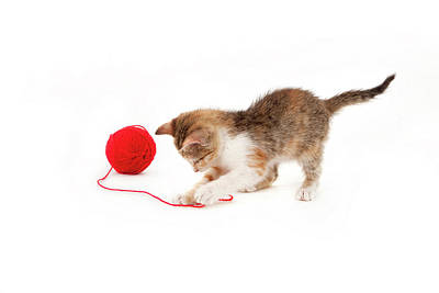 Kitten Playing With A Ball Of Red Wool Art Print by By Kerstin Claudia