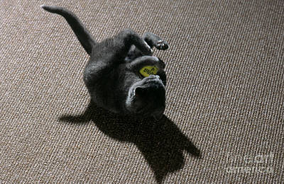Kitten Playing With Ball Art Print by James L. Amos