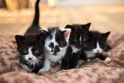 Kitten Sisters Art Print by Iris Richardson