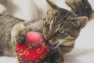 Animal Photograph - Kitten With Christmas Ball by Jaroslav Frank