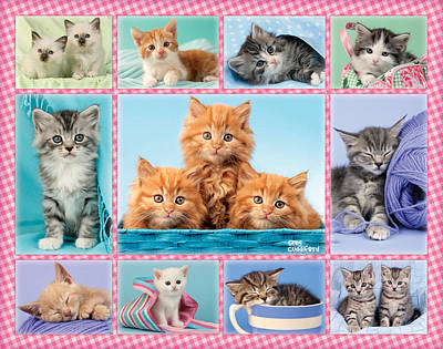 Gingham Photograph - Kittens Gingham Multipic by Greg Cuddiford