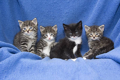 Kittens Sitting On Blanket Art Print